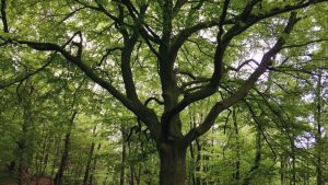 Stumpe Baum 300x169