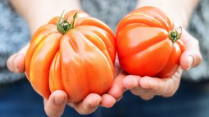 Weidenhof Tomaten 1024x576 1 300x169