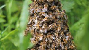 WildnisWerkstatt Bienen 300x169
