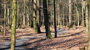 Ruhe Forst 3 300x169